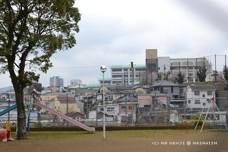 nagasakisakura7.jpg