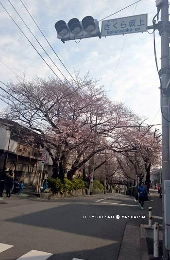sakurazaka2017_1.jpg